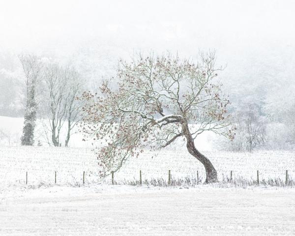 Winter Walk by flowerpower59