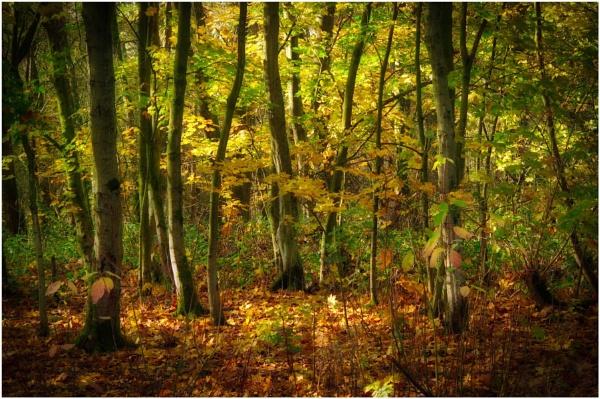 Autumn Gold & Green by sueriley