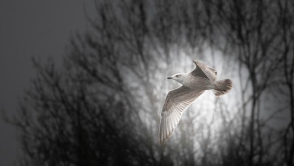 Seagull..... by Alex64