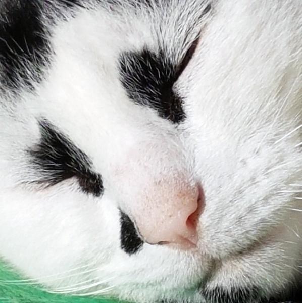 CAT by graceland