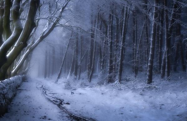 Winter Freeze by Legend147