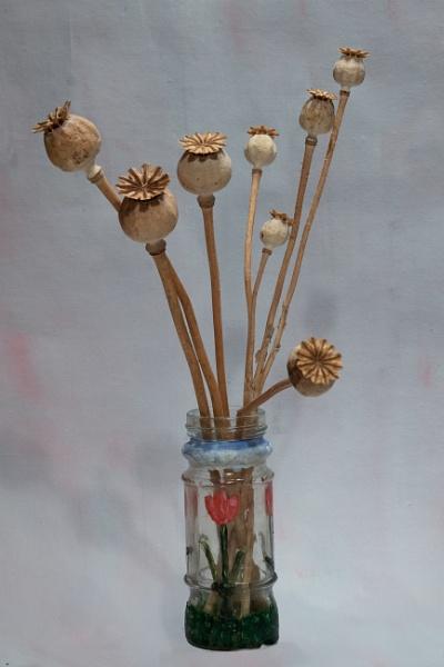 Poppy Seed Heads by Aveeno