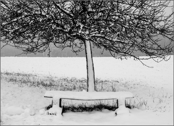 Apple Tree With Bench by kw