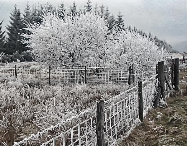 Hoar frost by dven