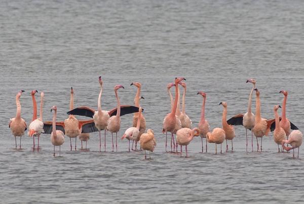 flamingos by gerti62