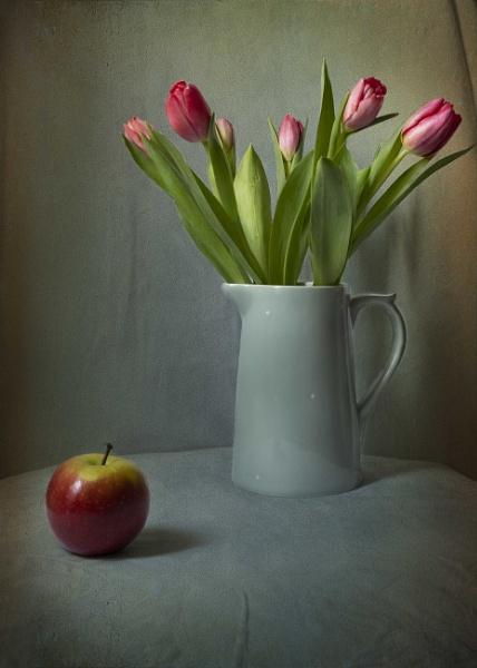 Tulip Still Life by swilliams71