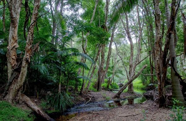 Little Creek by Peco