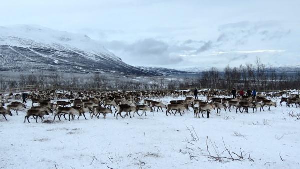 Sami Reindeer Farm by TheURL