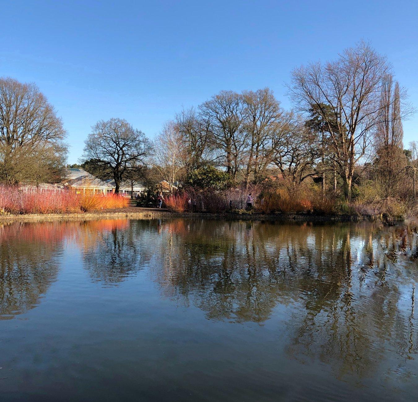Winter colour at Wisley