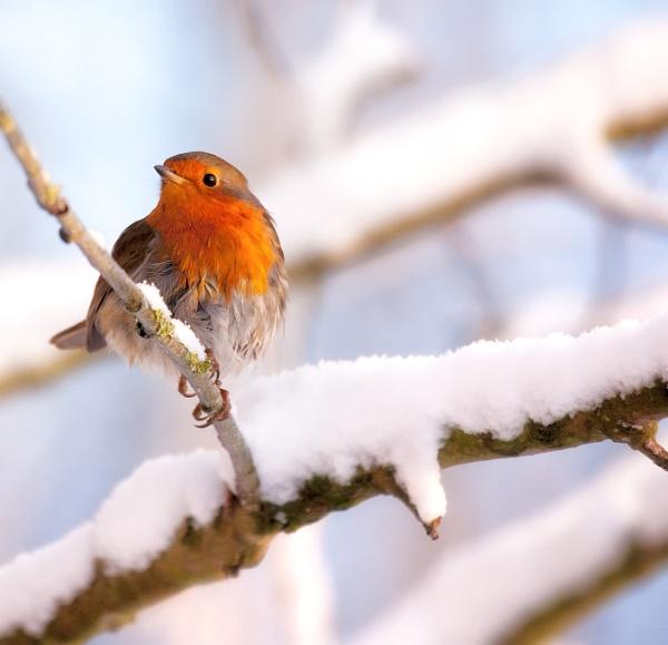 Robin of Sherwood by chris-p