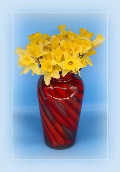 Daffodills by r0nn1e