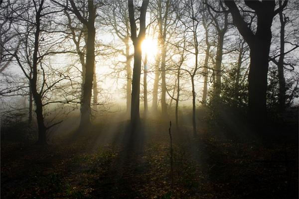 Misty Solitudes by Techno