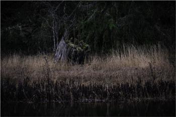 Just a Stump