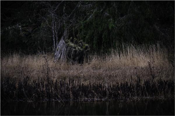 Just a Stump by Daisymaye