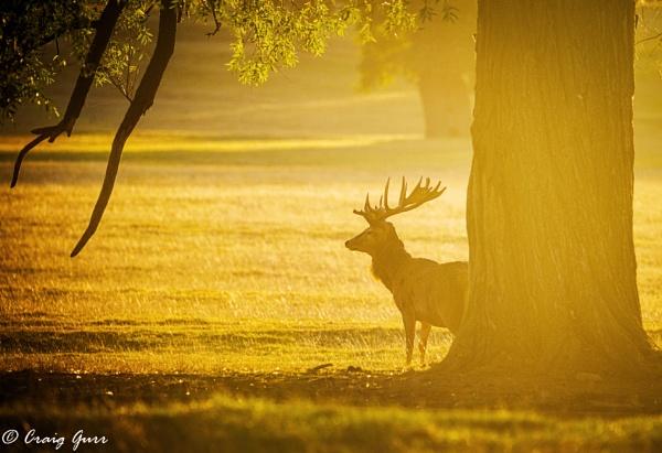 Morning Light by Craig75