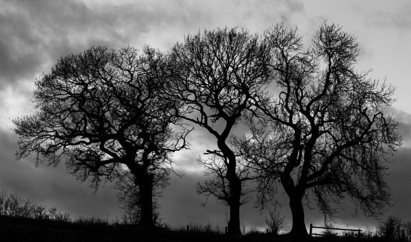 Trio by nstewart