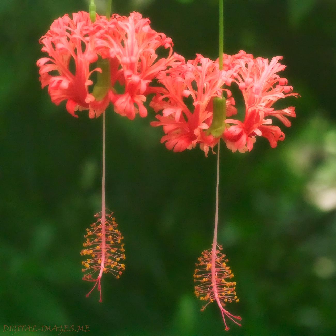 Eden Project Flower