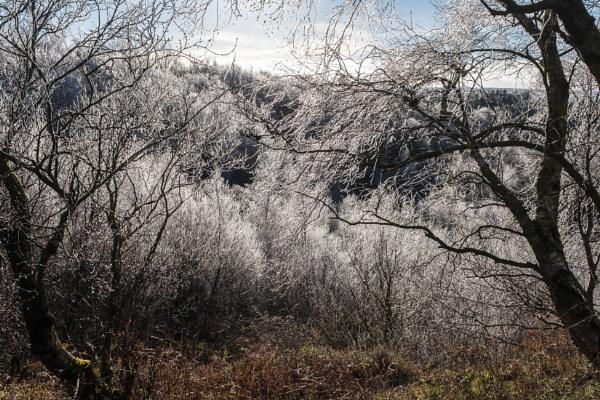 Hoar Frost by mbradley