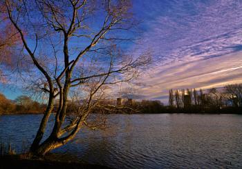 Winter on Charlton's pond.