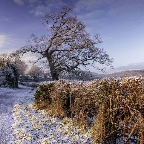 Winter light by mommablue