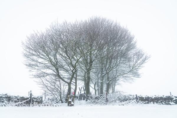 Winter Copse by Trevhas
