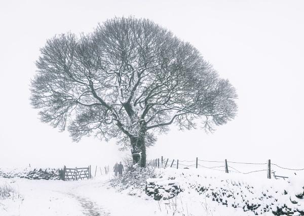 The Big Tree by Trevhas