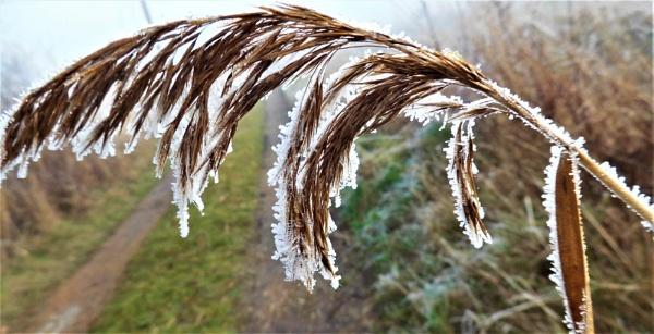 frozen grass by jenny007