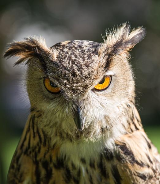 You looking at me?!! by Birdie58