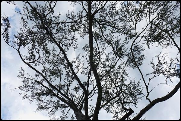 windtree by FabioKeiner