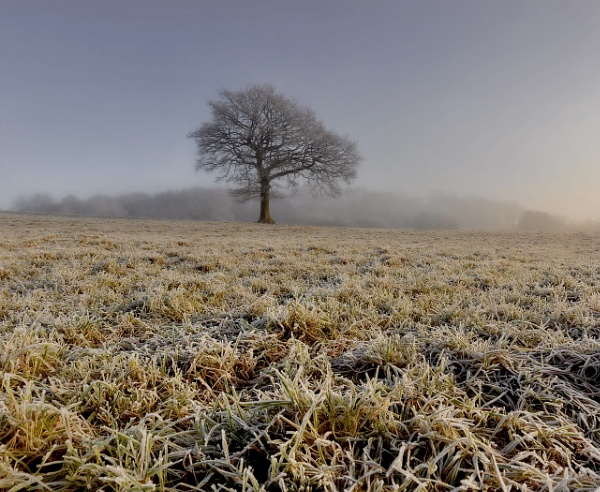 Frosty Morn by Albooth
