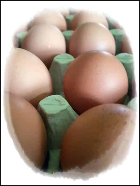 Lockdown Eggs by graceland