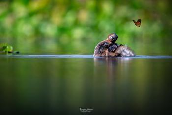 Nature's Romanticsm