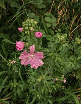 We should enjoy the  summer flowers
