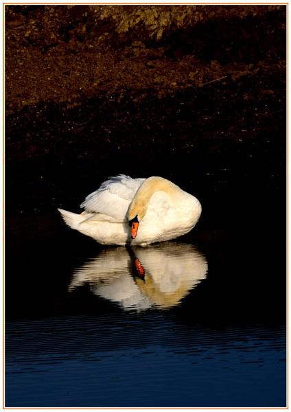 Swan Lake by Howard2