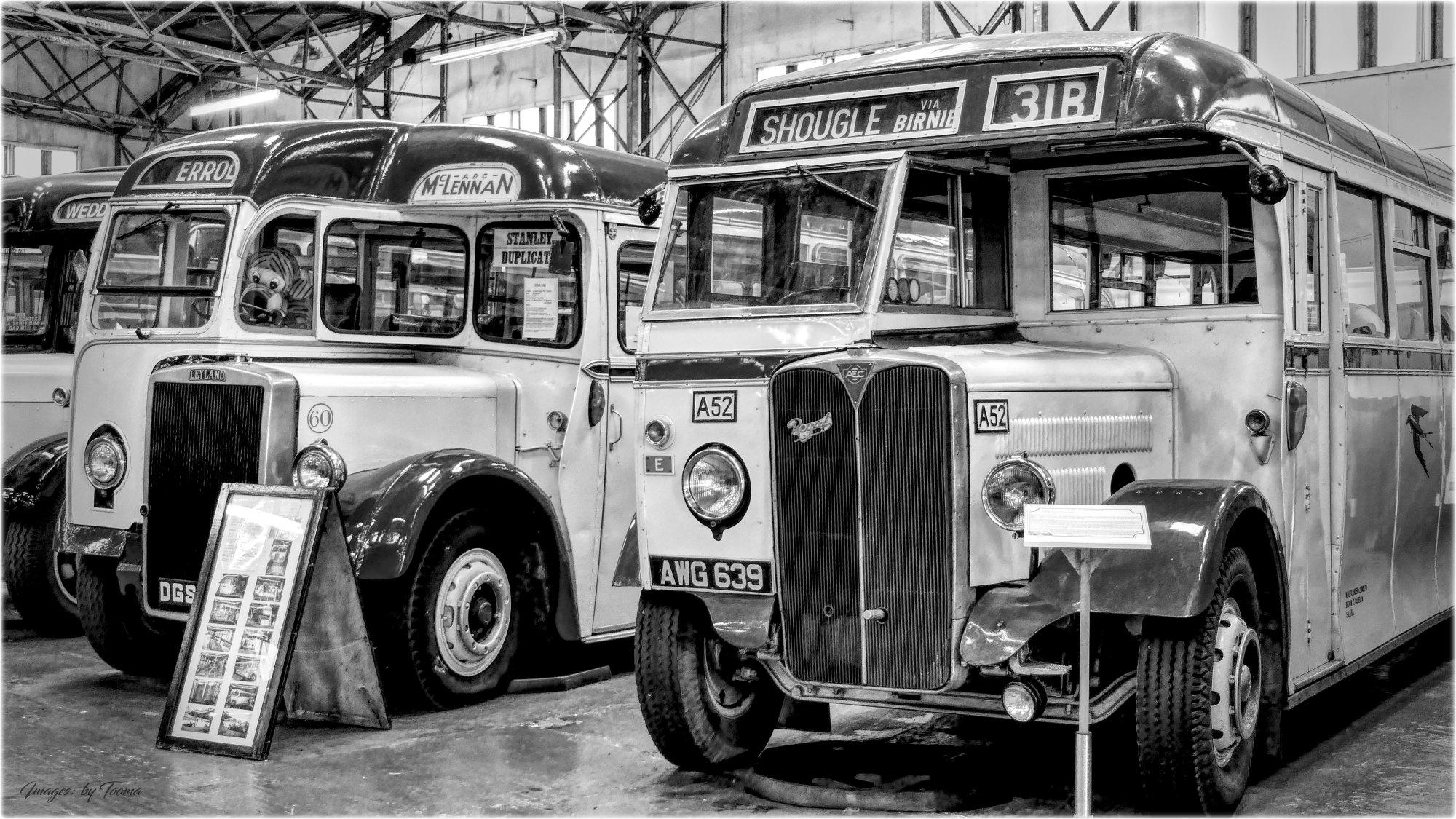 The Shougle Bus.