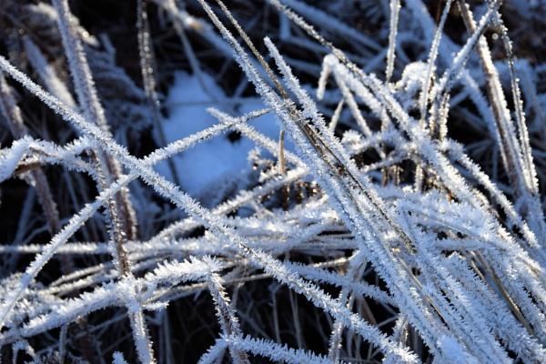 #Frost by davyskid