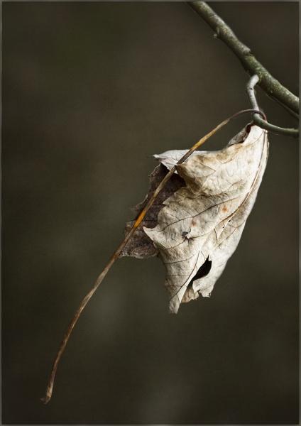 Hanging  On by AlfieK