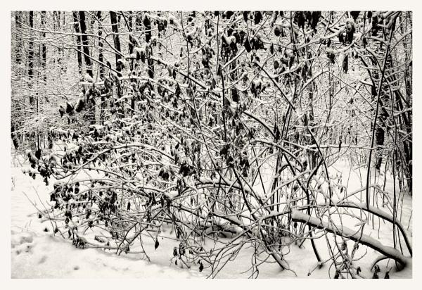 winter leaves by leo_nid
