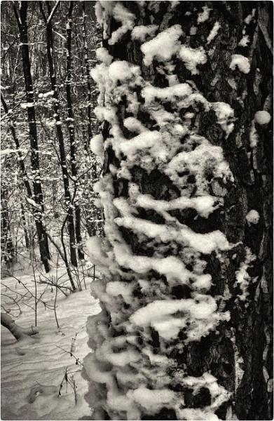woodland detail by leo_nid