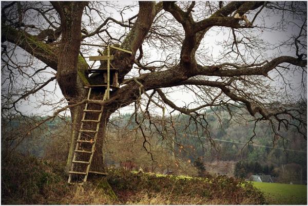 The Oak by kw
