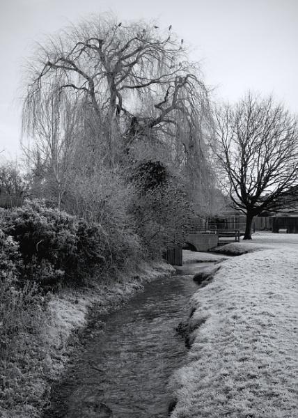 Winter Trees 1 by PhotoLinda