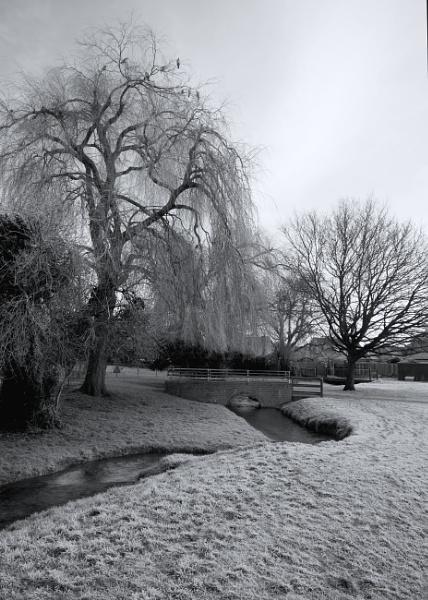 Winter Trees 2 by PhotoLinda