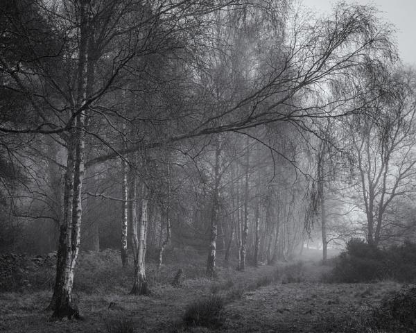 Birch Avenue by JelFish