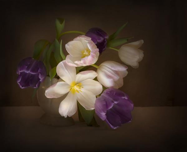 Tulip Tumble by swilliams71