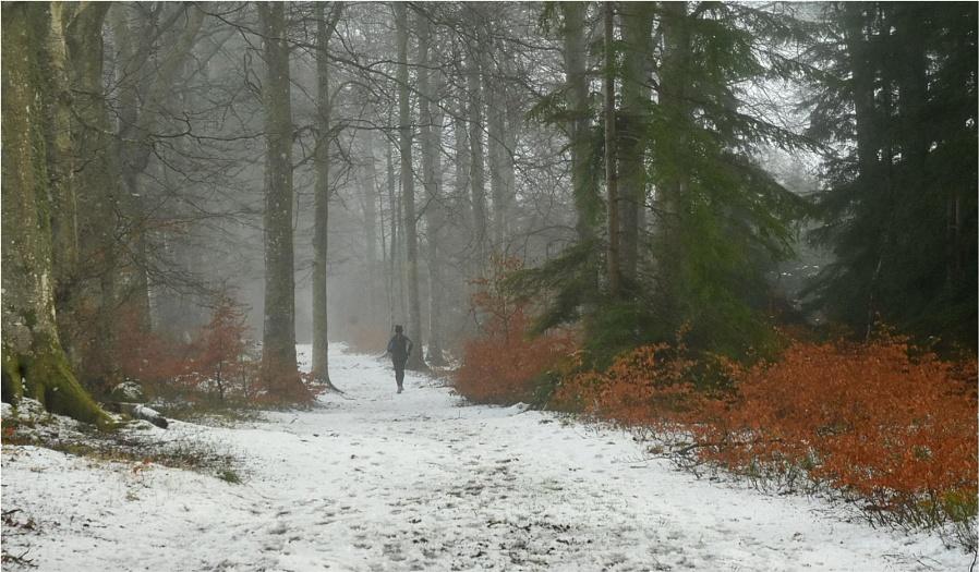 Winter Training Run