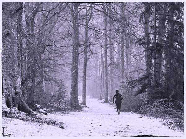 Winter Training Run 2 by MalcolmM
