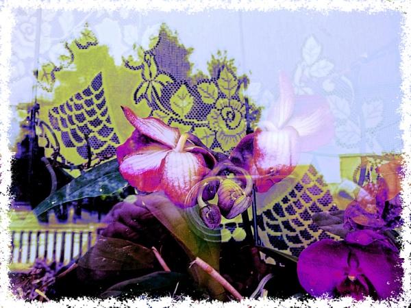 flowers behind the window by elousteve