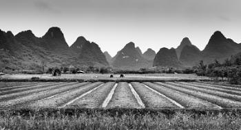 Toil in the Fields
