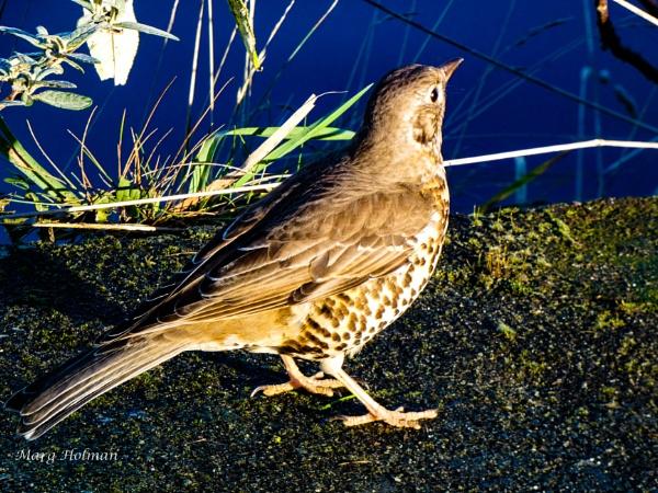 Free as a bird by margymoo