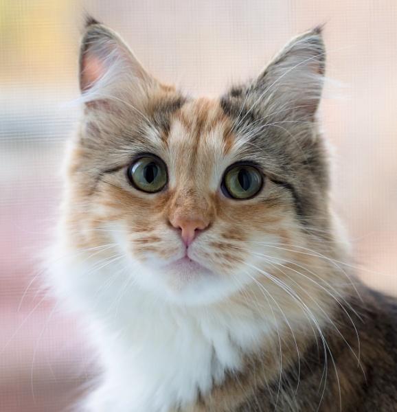 Cat* by Alex_r